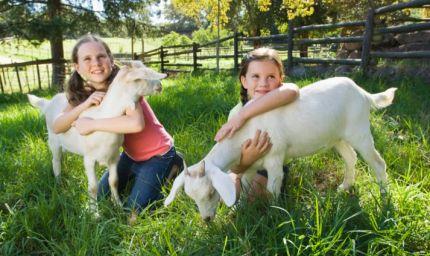 I diritti negli animali a scuola