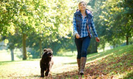 Educazione del cane? Una questione di tempo