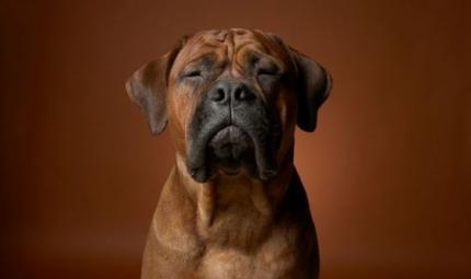 I cani e le espressioni del viso per comunicare