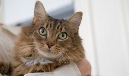 I gatti e il loro benessere