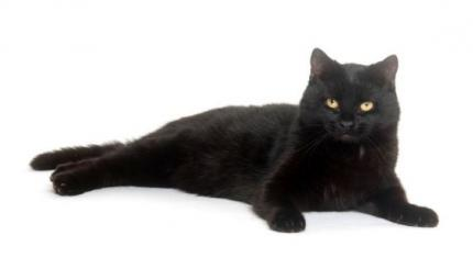 Il gatto nero day