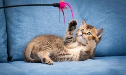 I giochi per i gatti
