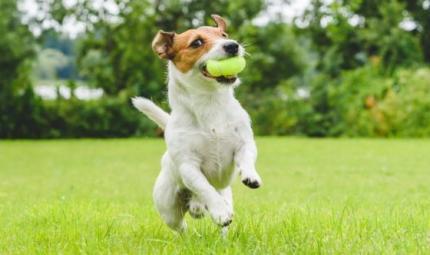 Le regole per giocare nel modo corretto con il cane