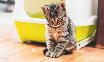 Il gatto ignora la lettiera? Ecco i motivi