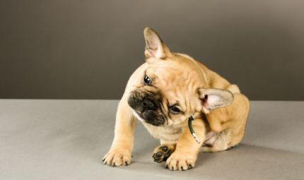 Le malattie parassitarie nel cane e nel gatto