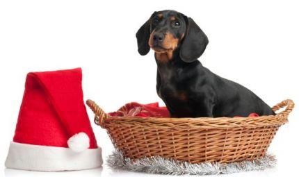 Merry Friskies, per un Natale tutto speciale