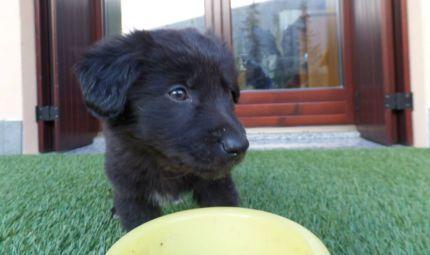 Un mese dedicato al tuo cucciolo