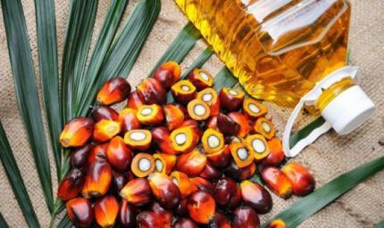 Verso l'Olio di palma sostenibile