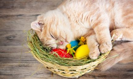 Una Pasqua da cani e gatti