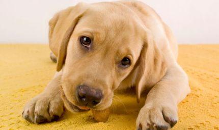 Pericolo snack per cani e gatti