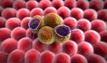 Precursori della vitamina A e cellule precancerose