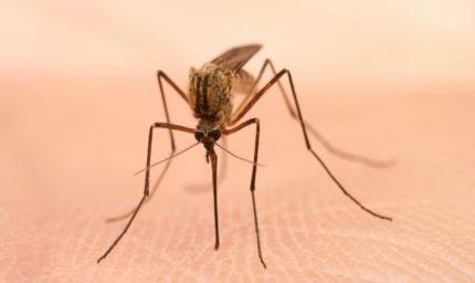 Punture d'insetto: quando c'è da preoccuparsi?