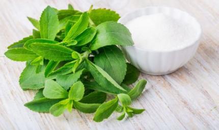 Cosa dobbiamo sapere sulla stevia