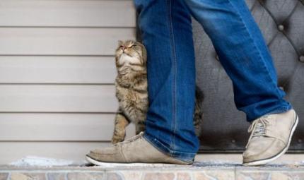 I sei suoni con cui i gatti comunicano