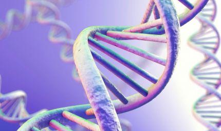 Un test genetico per prevedere l'obesità dei bambini