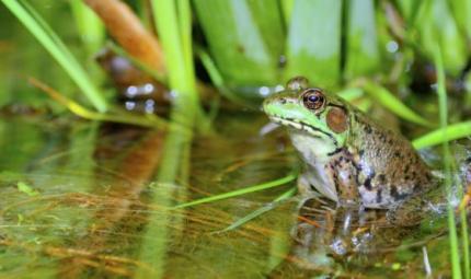 La triste vicenda delle rane applicata alla dietologia