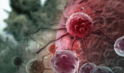 Scoperta la proteina che aiuta i tumori ad alimentarsi