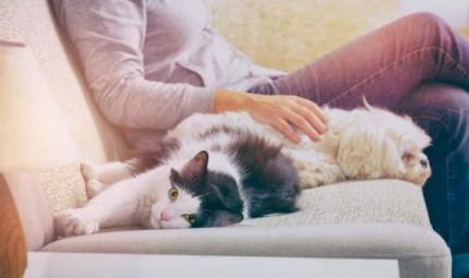 Al via petizione della Lav: Gli animali non sono un lusso