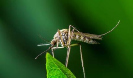 Zanzare: insetti che possono farci ammalare quest'estate