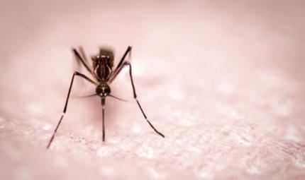 Le zanzare non trasmettono il Coronavirus