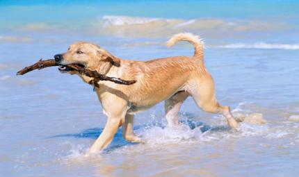 Il cane migliore per le tue esigenze