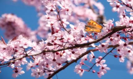 Depurazione di primavera: fai le mosse giuste