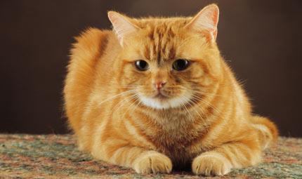 ABC del gatto