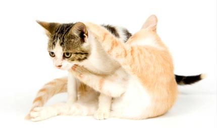 L'aggressività nel gatto