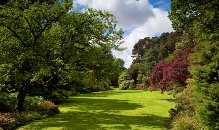 Gli alberi aiutano contro asma e allergie
