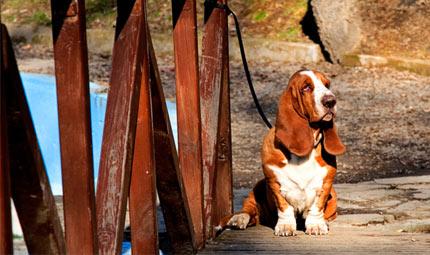 Allarme maltrattamento di cani e gatti ad opera dei bambini