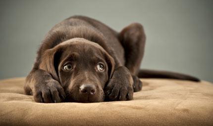 La Brontofobia nel cane