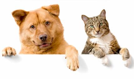10 domande sul comportamento del cane e del gatto