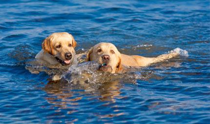 Idroterapia: riabilitazione e allenamento del cane