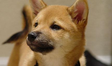 Bella stagione: cani esposti al pericolo leishmaniosi