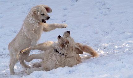 Micio e fido sulla neve