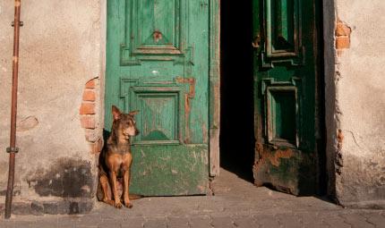 Terremoto in Emilia: aiuti per gli animali sfollati