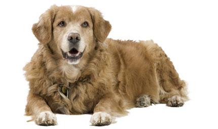 Fido in treno: nuovo servizio anche per i cani XXL