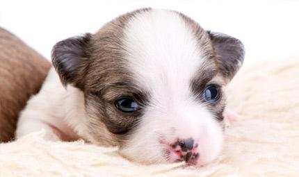 Il cucciolo: come alimentarlo?
