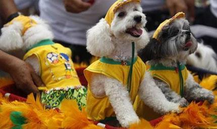 Dog Carnival Parade