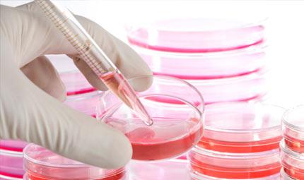 Epatite c: nuova terapia per inibire il virus