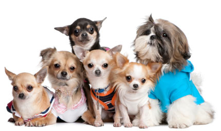 Fashion  day for fashion dogs