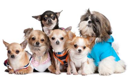Fashion  day for fashion dogs