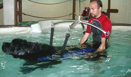 Fisioterapia: un'arma in più per aiutare i nostri animali