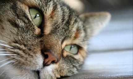 Scatti con il muso: il cane, il gatto e il selvatico