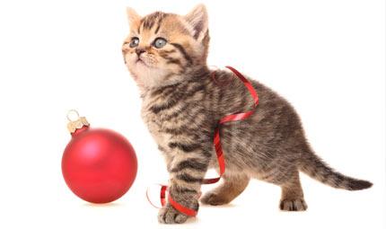 Un Natale a misura di Pet