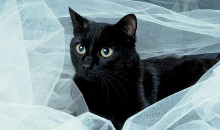 Al via le ronde pro gatto nero