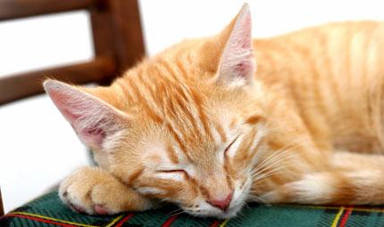 Il tuo gatto è una zampa avanti?