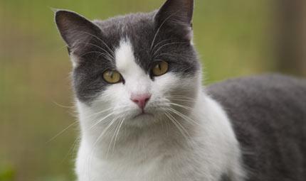 Il linguaggio dei gatti for Il linguaggio dei gatti