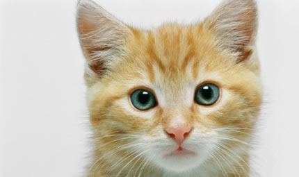 La salute del gatto