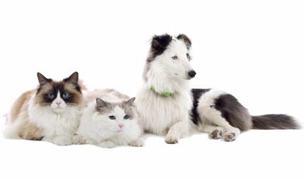 La Giardia nel cane e nel gatto